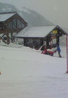 なんと今日雪が積もった!
